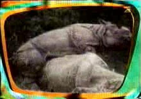 Установлено, бесплатно прикольные видео ролики про животных послужил.